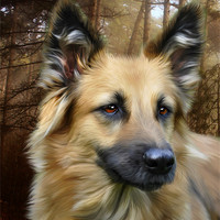 Buy canvas prints of German Shepherd by Julie Hoddinott