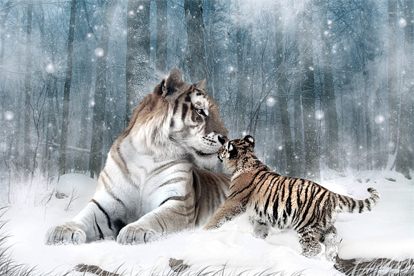 Kaiser Katrina and the Kiss Tiger Canvas Print Canvas print by Julie Hoddinott