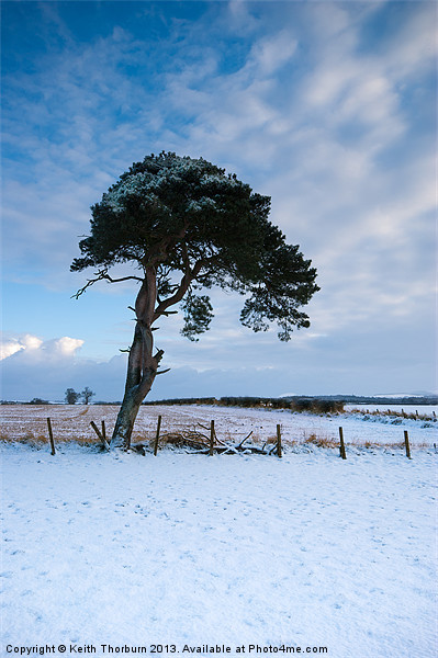 Winter Tree Canvas print by Keith Thorburn