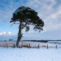 Buy canvas prints of Winter Tree by Keith Thorburn