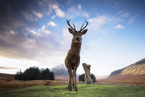 Highland Stag Canvas print by Keith Thorburn