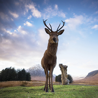Buy canvas prints of Highland Stag by Keith Thorburn