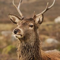 Buy canvas prints of Red Deer by Keith Thorburn EFIAP