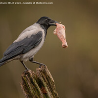 Buy canvas prints of Hooded Crow by Keith Thorburn EFIAP
