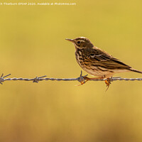 Buy canvas prints of Meadow Pipit by Keith Thorburn EFIAP