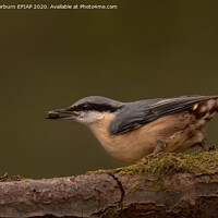 Buy canvas prints of Nuthatch by Keith Thorburn EFIAP