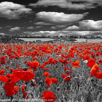Buy canvas prints of Crimson Poppies by J Biggadike