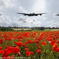 Buy canvas prints of Poppy Fly Past by J Biggadike