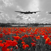 Buy canvas prints of Poppy Flypast Selective by J Biggadike
