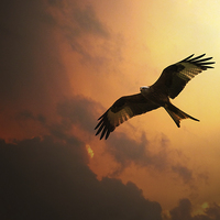 Buy canvas prints of Red Kite by J Biggadike