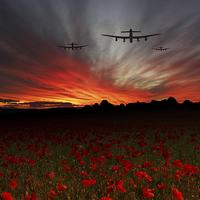 Buy canvas prints of A Poppy Field Dream  by J Biggadike