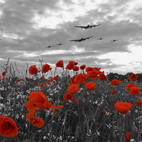 Buy canvas prints of Warbirds Remembrance - Selective  by J Biggadike
