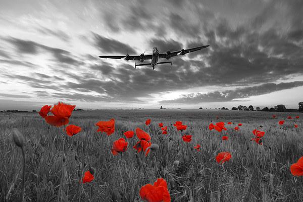 Field Of Dreams - Red Canvas print by J Biggadike