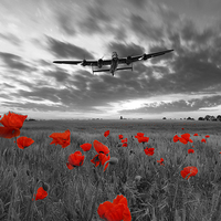 Buy canvas prints of Field Of Dreams - Red by J Biggadike