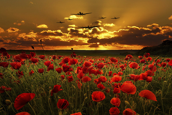 Sunset Poppies The BBMF Canvas print by J Biggadike