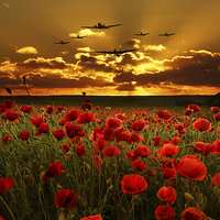 Buy canvas prints of Sunset Poppies The BBMF by J Biggadike