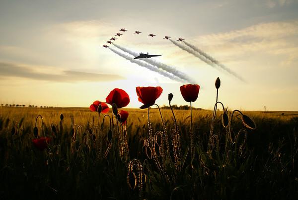 XH558 Red Arrows Poppy Field Framed Mounted Print by J Biggadike
