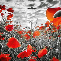 Buy canvas prints of Vulcan Poppy Pass - Selective by J Biggadike