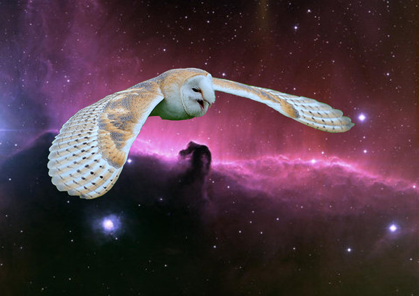 Barn Owl v. Horse head Nebula. Canvas print by Heather Goodwin