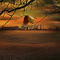 Buy canvas prints of Raven's Awakening by Heather Goodwin