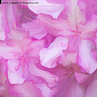 Buy canvas prints of Acrylic Pink Rhododendrons by Lynn Bolt