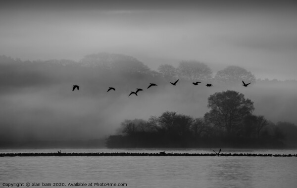 Geese at dawn over the misty Loch of Skene Canvas Print by alan bain