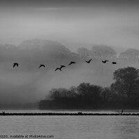 Buy canvas prints of Geese at dawn over the misty Loch of Skene by alan bain