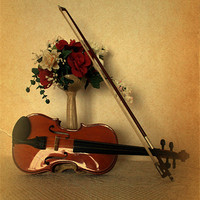 Buy canvas prints of A Violin for Christmas by Jacqui Kilcoyne