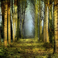 Buy canvas prints of  Sunrise in the forest by Irene Burdell