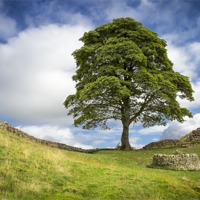 Buy canvas prints of Sycamore Gap (the