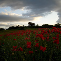 Buy canvas prints of penshaw monument poppy field. by Northeast Images Daniel Dent