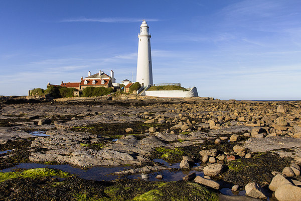 St Mary`s Lighthouse Canvas Print by Northeast Imag Dent