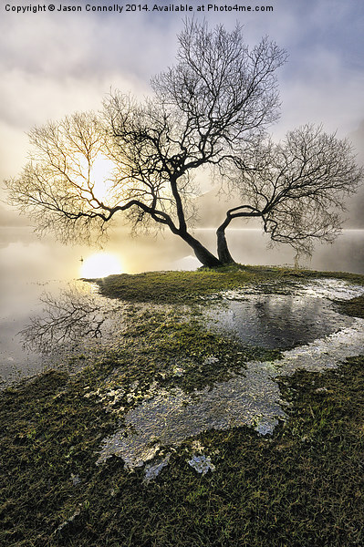 Ullswater Tree Canvas print by Jason Connolly