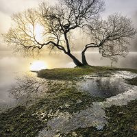 Buy canvas prints of  Ullswater Tree by Jason Connolly