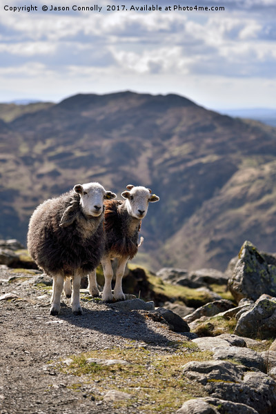 The Langdale Herdies Canvas print by Jason Connolly