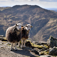 Buy canvas prints of The Langdale Herdies by Jason Connolly