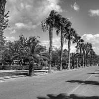 Buy canvas prints of Limassol Promenade - B&W by Tom Gomez