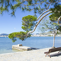 Buy canvas prints of Rest On The Pine Walk in Puerto Pollensa by Gerry Greer