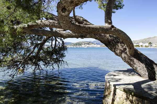 Puerto Pollensa Harbour From The Pine Walk Canvas print by Gerry Greer