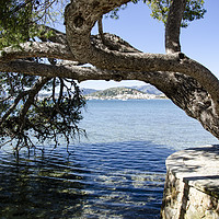Buy canvas prints of Puerto Pollensa Harbour From The Pine Walk by Gerry Greer
