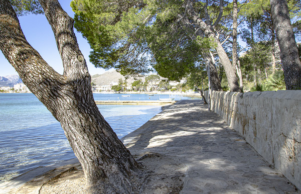 Pine Walk Puerto Pollensa Mallorca Framed Mounted Print by Gerry Greer