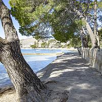 Buy canvas prints of Pine Walk Puerto Pollensa Mallorca by Gerry Greer