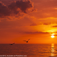 Buy canvas prints of Birds At Sunset by Lynne Morris (Lswpp)