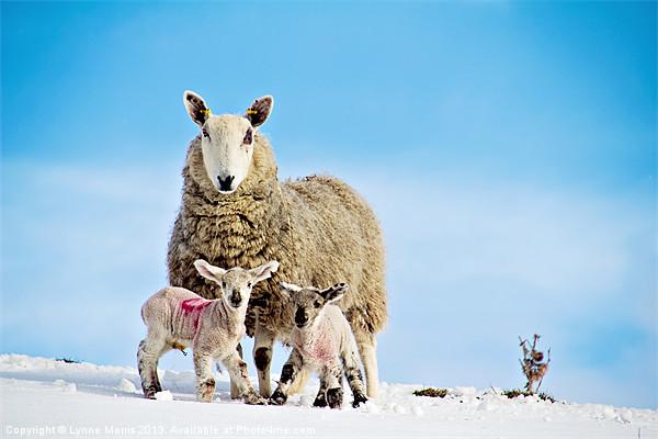 Spring Time In Scotland Print by Lynne Morris (Lswpp)
