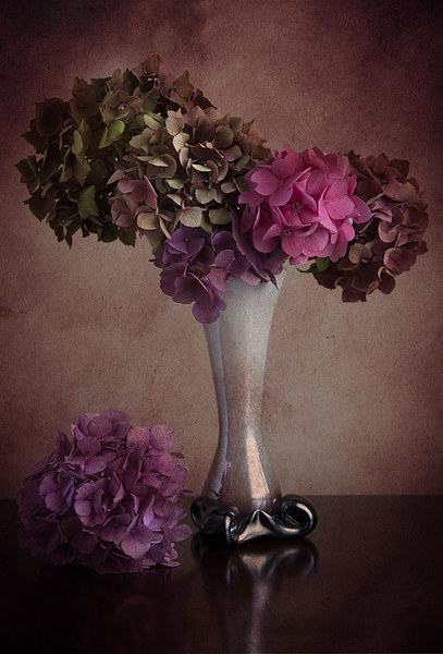 Hydrangea in vase Canvas print by Eddie John