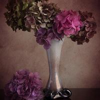 Buy canvas prints of  Hydrangea in vase by Eddie John
