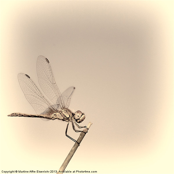 Dragonfly Canvas print by Martine Affre Eisenlohr