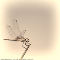 Buy canvas prints of Dragonfly by Martine Affre Eisenlohr