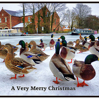 Buy canvas prints of Merry Xmas to Everyone on P4ME by Lilian Marshall