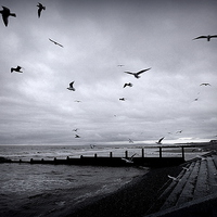 Buy canvas prints of Seagulls at Cleveleys. by Lilian Marshall